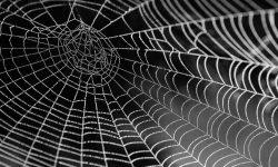 Hämähäkki unessa: Unien tulkinta