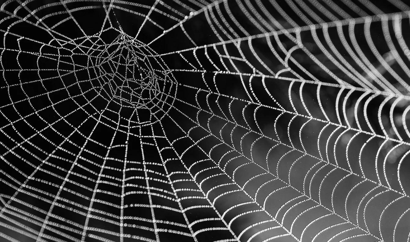 Hämähäkit Unessa