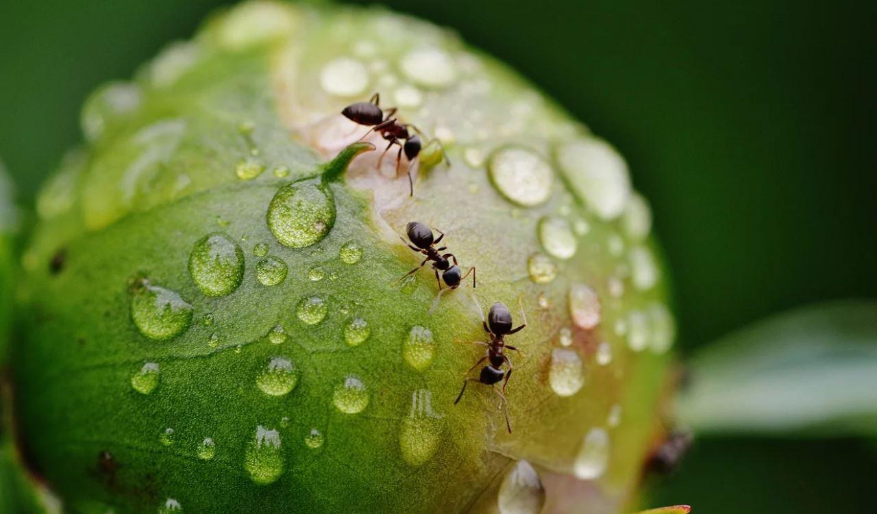 Unien tulkinta muurahainen