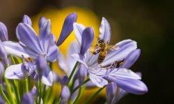 Mehiläinen unessa: Unien tulkinta