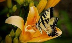 Perhonen unessa: Unien tulkinta