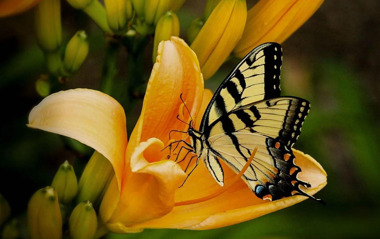 Unien tulkinta perhonen