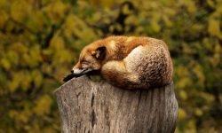 Eläimet unessa: Unien tulkinta