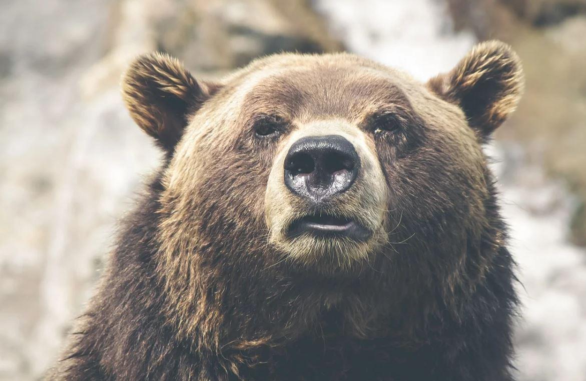 Karhu Unessa