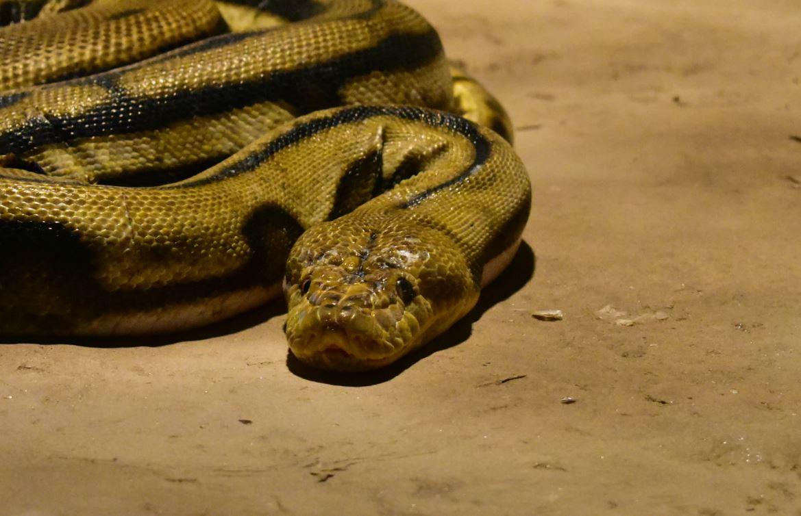 Käärme Unessa