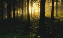 Metsä unessa: Unien selitykset ja tulkinta