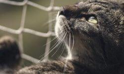 Kissa unessa: Unien selitykset ja tulkinta