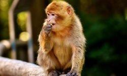 Apina unessa: Unien selitykset ja tulkinta